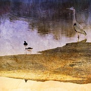 Anne Thurston - Blue Heron