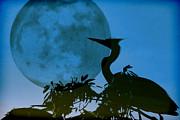 Dorothy Menera - Blue Heron Blue Moon