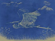 Marilyn Giannuzzi - Blue Heron In Flight