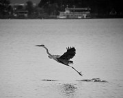 Joseph Duba - Blue Heron on...