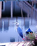 Ocean City Posters - Blue Heron Reflections Poster by Kim Bemis