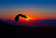 John Haldane Prints - Blue Heron Rising with the Sun Print by John Haldane