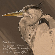 Wildlife Digital Art Framed Prints - Blue Heron Sketch Framed Print by Aaron Blaise