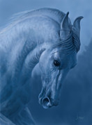 Jephyr Art - Blue Horse - Photo Study