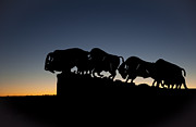 Bison Photos Posters - Blue Hour at Caprock Canyons State Park Poster by Melany Sarafis