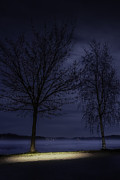 Winter Night Art - Blue Hour Tree by Erik Brede