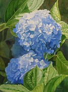 Close Up Floral Painting Prints - Blue Hydrangea Blossoms Print by Sharon Freeman