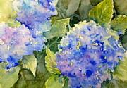 Blue Hydrangea Print by Cynthia Roudebush