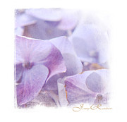 Kids Prints Photo Prints - Blue Hydrangea. Mini-Square Idea for Interior Print by Jenny Rainbow