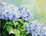 Blue Hydrangeas Print by Elizabeth  McRorie