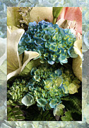 All - Blue Hydrangeas Painterly by Andee Photography