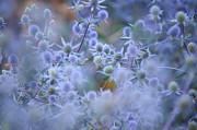 Jenny Rainbow - Blue Infinity