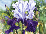 Purple. Iris. Buds Prints - Blue Iris Print by Patricia Allingham Carlson