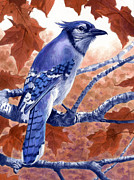 Blue Bird Metal Prints - Blue Jay Metal Print by Alan  Hawley