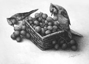 Blue Grapes Drawings Framed Prints - Blue Jay and Grapes Framed Print by LingKit Lo