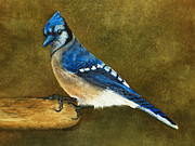 Nan Wright - Blue Jay