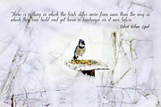 Elizabeth Lima - Blue Jay On A Snowy