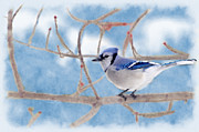 Dan Friend - Blue Jay portrait blue background
