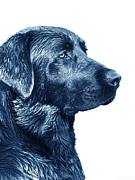Labrador Retrievers Prints - Blue Labrador Retriever Dog  Print by Jennie Marie Schell