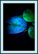 Multiples Photos - Blue Lily Pad by Susanne Van Hulst