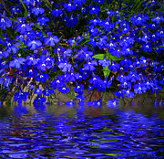 Pond Greeting Cards Digital Art - Blue Lobelia by Joyce Dickens