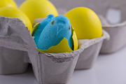 Easter Celebration Posters - Blue Marshmallow Chick Hatched in Egg Carton Poster by Juli Scalzi
