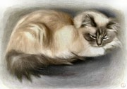 Cat Digital Art - Blue masked Birman by Gun Legler