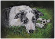 Cute Pastels Framed Prints - Blue Merle Border Collie Framed Print by Irisha Golovnina