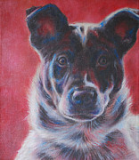 Kimberly Kelly Santini Framed Prints - Blue Merle on Red Framed Print by Kimberly Santini