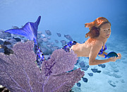 Angel Mermaids Ocean Posters - Blue Mermaid Poster by Paula Porterfield-Izzo