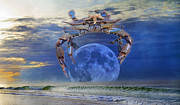 Horizon Line Digital Art - Blue Moon Crab by Betsy A Cutler East Coast Barrier Islands