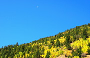 Lush Colors Posters - Blue Moon over the Aspen Groves Poster by Amy McDaniel