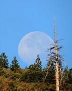 Logging Camp Prints - Blue Moon Print by Vicki Buckler