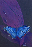 Wings Drawings - Blue Morpho Butterfly by Terri Mills