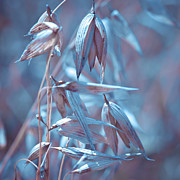 Oat Photos - Blue Oat by Viaina