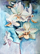 Orchids Drawings - Blue Orchid by Mindy Newman