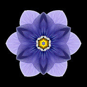 Blue Pansy I Flower Mandala Print by David J Bookbinder