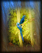 Blue Parrots Print by Linda Olsen