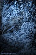 LeeAnn McLaneGoetz McLaneGoetzStudioLLCcom - Blue Peacock