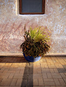 Brick Patio Posters - Blue Planter Morning Sun Poster by Ann Powell