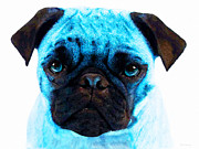 Pugs Framed Prints - Blue - Pug Pop Art By Sharon Cummings Framed Print by Sharon Cummings