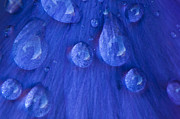 Droplet Framed Prints - Blue Rain Framed Print by Anne Gilbert