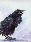 Raven Drawings Originals - Blue Raven by Amanda Ellis
