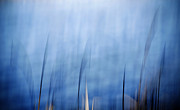 Marilyn Hunt - Blue Reed