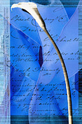 Ribbon Mixed Media Posters - Blue Ribbon Calla Lilly Poster by Anahi DeCanio