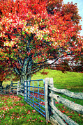 Fall Colors Autumn Colors Photo Posters - Blue Ridge - Fall Colors - Autumn Maple Tree Fence Gate II Poster by Dan Carmichael