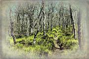 Dan Carmichael - Blue Ridge Mountains...