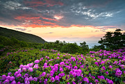 Beautiful Landscapes Posters - Blue Ridge Parkway Sunset - Craggy Gardens Rhododendron Bloom Poster by Dave Allen