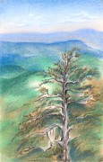 Haze Pastels Posters - Blue Ridge Pine Poster by MM Anderson