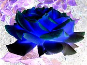 Luminous Digital Art Posters - Blue Rose Poster by Will Borden